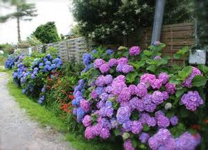 Landscape Pictures With Hydrangeas Landscaping With Hydrangeas 15 Garden Design Ideas