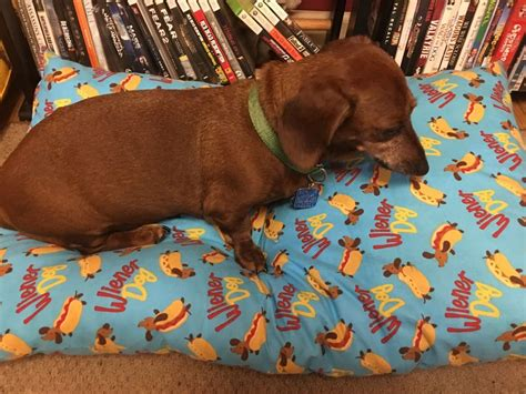 dachshund bed dachshund hot dog bun bed anti chew raised dog beds noten