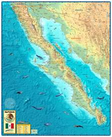 baja california wall map by compart maps