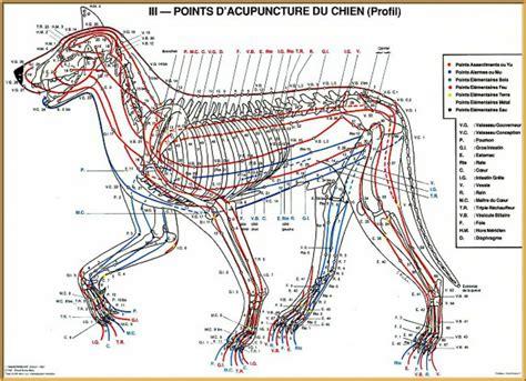fior di prugna agopuntura firenze agopuntura in veterinaria vantaggi storia e applicazioni