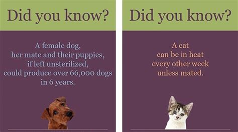 benefits of spaying a spay neuter your pet laurel park animal hospital laurel park nc