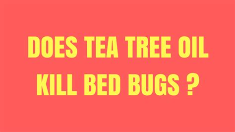 tea tree oil for bed bugs does tea tree oil kill bed bugs does it treat bed bug bites