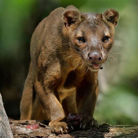 animals  zones singapore zoo wildlife reserves