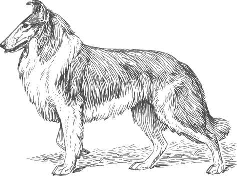 Perros Para Dibujar A Lapiz Paso A Paso Imagui