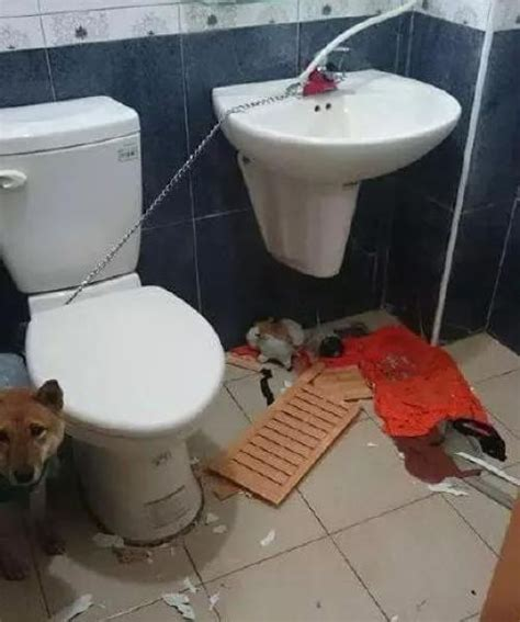 lock cat in bathroom locking a dog up in a bathroom is a horrible idea others