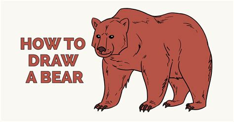 draw  bear    easy steps easy drawing guides