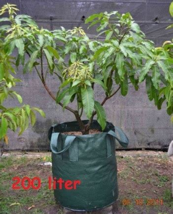 Jual Planter Bag 200 Liter jual planter bag hijau 200 liter bibit