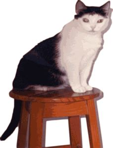 Cat With Stool by Cat On Stool Clip At Clker Vector Clip