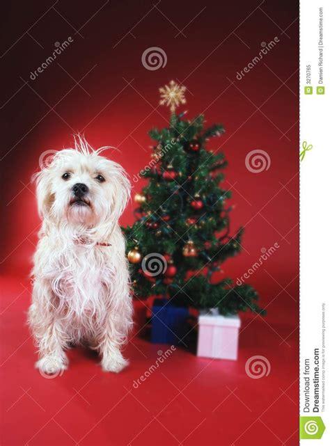 dog   christmas tree stock image image  dogs