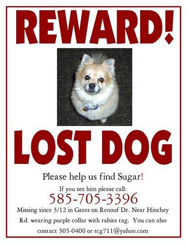 Lost Pet Template Car Interior Design Lost Reward Poster Template