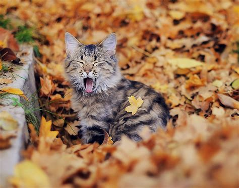 wallpaper cat autumn sweater weather tag the beau life