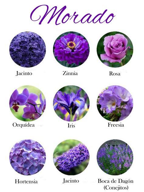 imagenes de flores y sus nombres flores con sus nombres related keywords suggestions