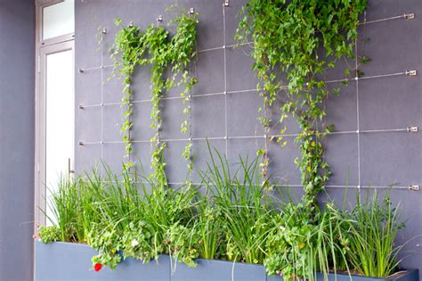 Green Wall Trellis green wall trellises contemporary other by tensile cables