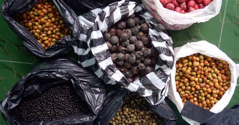 Jual Lu Tidur Malang jual aneka perlengkapan outdoor cing murah jual aneka perlengkapan outdoor cing murah jual benih