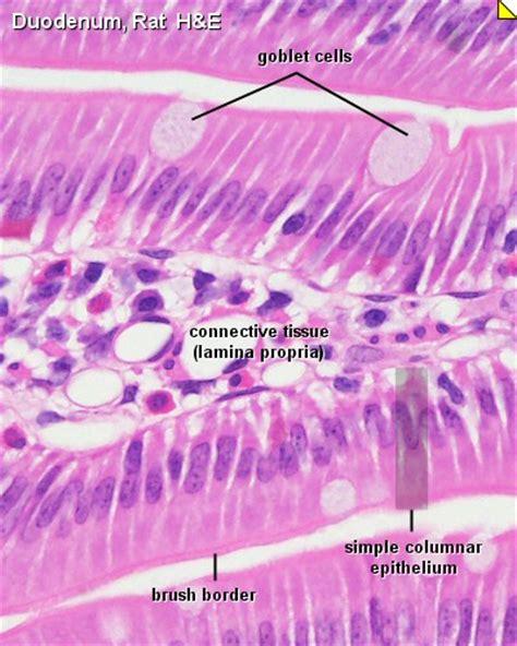 Bio 205 Lab Images