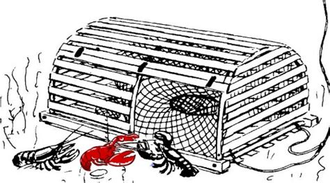 lobster trap diagram lobster 101 all about maine lobsters from lobster experts