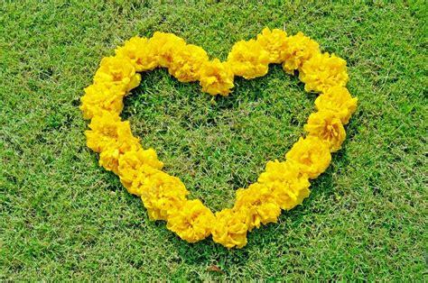 fiore a forma di cuore fiore di cotone giallo albero a forma di cuore sul prato