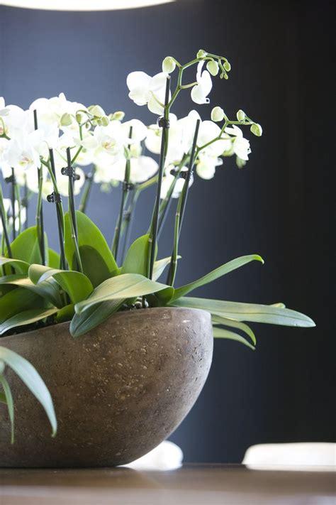 beautiful large orchid display entry saarinen table