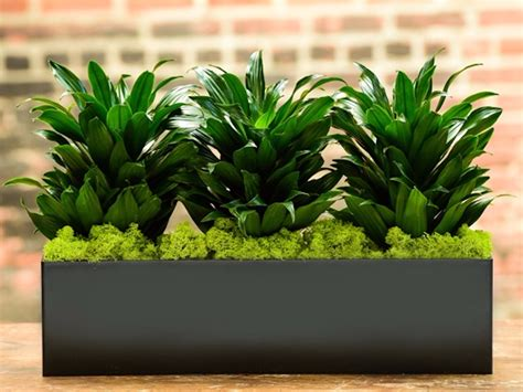 plants that can survive without light 5 idiot proof houseplants that can live for weeks without