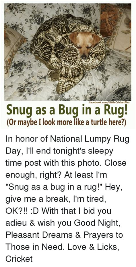 snug as a bug in a rug origin snug as a bug in a rug origin 28 images snug as a bug in a rug idiom of the day for ielts