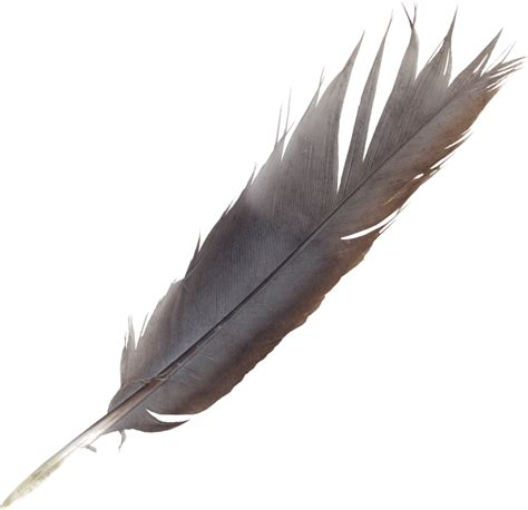 tattoo pen png feather pen png pictures to pin on pinterest tattooskid