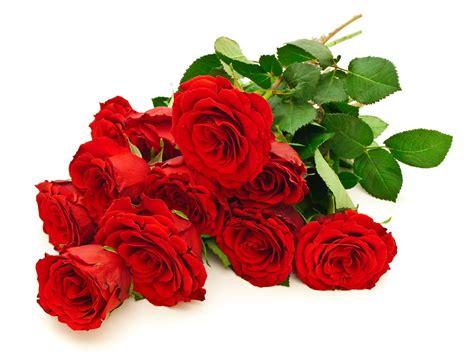 imagenes d flores rojas flowers galer 237 a de im 225 genes