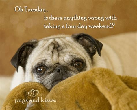 pug slogans pug quotes and sayings quotesgram