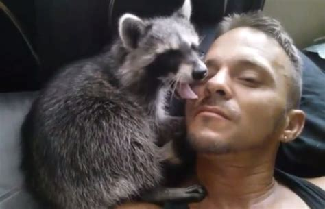 guy fucking bed man chillin in bed with his pet racoon video