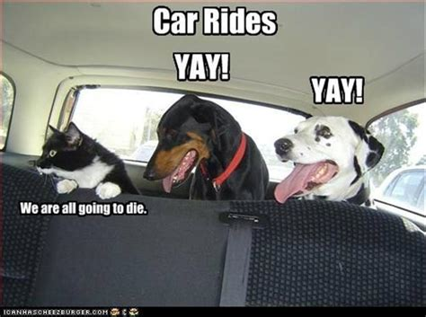 Dog In Car Meme - 10 of the most hilarious dog memes from across the internet