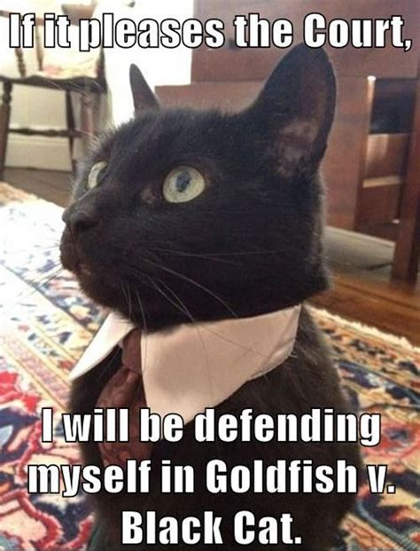 Lawyer Cat Meme - 8 best lawyer cat images on pinterest funny kitties