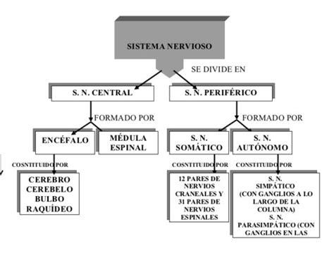 imagenes mentales involuntarias informaci 243 n de diferencia entre sistema nervioso central y
