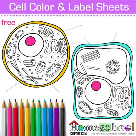 Plant Cell Coloring Page With Labels free cell coloring page animal plant cell color and