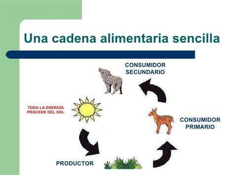 cadena alimenticia acuatica consumidores primarios cadenas alimentarias