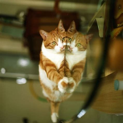 Cat Tanco reflection cat 1funny