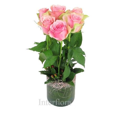 Vase Of Pink Roses by 6 Pink Roses In A Vase