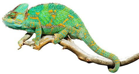 27 best reptiles and hibians images on pinterest ecovivarium 174 step in to their world 174 top reptiles