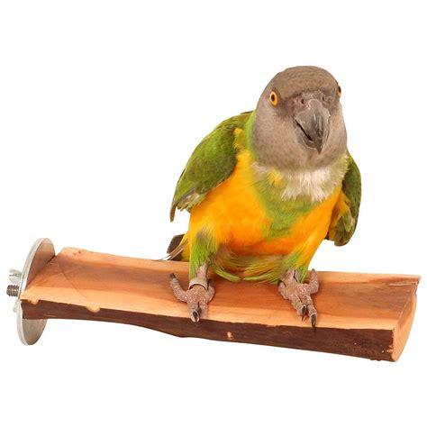 manzanita flat parrot perch small
