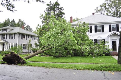 neighbor s tree fell on my house who is responsible if my neighbor s tree fell on my house car shed or swingset