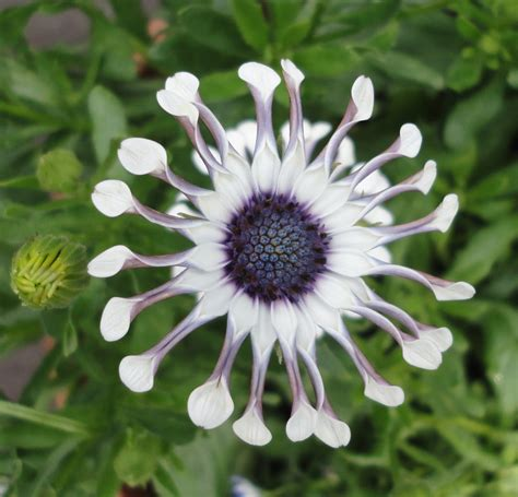 unusual flowers notes from norma unusual flower