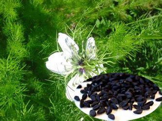 jintan herbal menyem buhkan ayan visionbali herbal indonesia