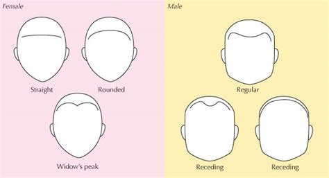 men hairline types human anatomy fundamentals advanced facial features