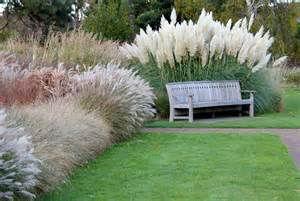 native ornamental grasses garden weasel