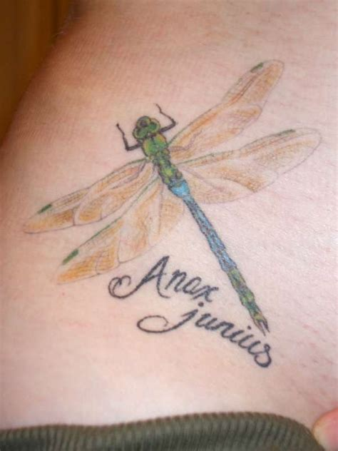 dragonfly tattoo placement 25 best dragonfly tattoo designs and placement ideas the
