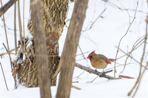 backyard birds of indiana pin by jen johnson on birds of indiana pinterest