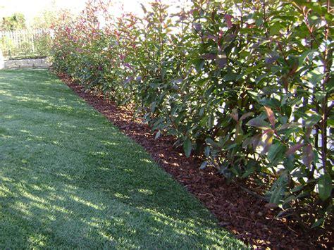 cordoli giardino progettazione giardini monza e brianza realizzazione