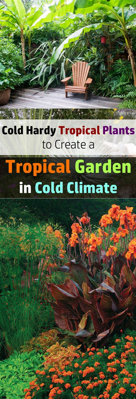 plants that grow in tropical climates 14 cold hardy tropical plants to create a tropical garden