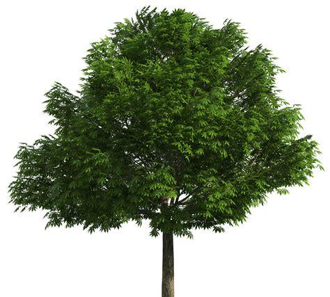 realistic tree png clip art best web clipart