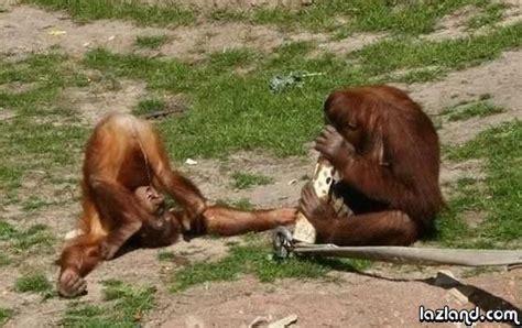 pis maymun komik resimler