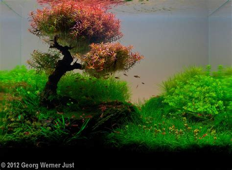 Aquascape Tree by 2012 Aga Aquascaping Contest 173