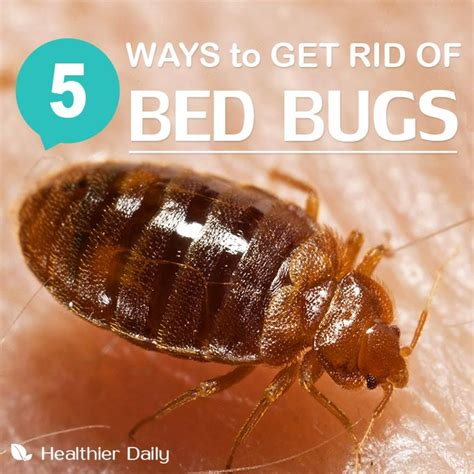 natural way to get rid of bed bugs natural ways to get rid of bed bugs 28 images how to